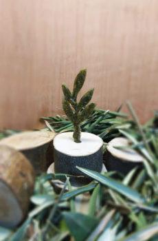 6.Olive twig.